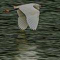 Snowy Egret On Estuary by Jeff Folger