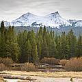 Snowy Fall In Yosemite by David Millenheft