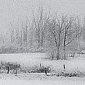 Snowy Fields by Michele Steffey