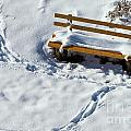 Snowy Foot Prints Around Snow Covered Park Bench by Stephan Pietzko