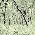 Snowy Forest by Birgit Tyrrell
