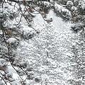 Snowy Forest by Marilyn Burton