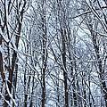 Snowy Forest by Tiffany Erdman