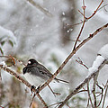 Snowy Grace Cardinals by Betsy Knapp