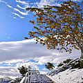 Snowy Lake Elsinore by Rowan Elisa