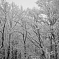 Snowy Landscape by Mary Zeman