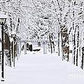Snowy Lane In Winter Park by Elena Elisseeva