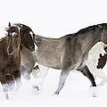 Snowy March II by Carol Walker