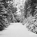 Snowy Mountain Road - Black And White by Carol Groenen