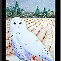 Snowy Owl by Jim Harris