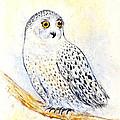 Snowy Owl by Kurt Tessmann