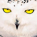 Artic Snowy Owl Painting by Bob and Nadine Johnston