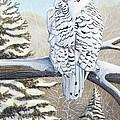 Snowy Owl by Rick Huotari
