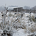 Snowy Pasture by Melany Sarafis