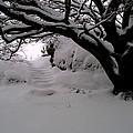 Snowy Path by Amanda Moore