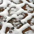 Snowy Path And Paw Prints by Karen Adams