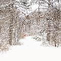 Snowy Path by Mary Timman