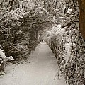 Snowy Path by Vicki Spindler
