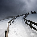 Snowy Pathway by David Lichtneker