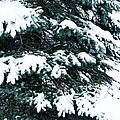 Snowy Pine by Nickaleen Neff