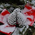Snowy Pinecones by Eric Armstrong