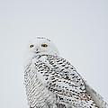 Snowy Portrait by Cheryl Baxter
