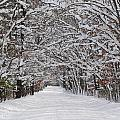 Snowy Road - 3 by Victoria Feazell