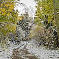 Snowy Road In Fall by Jeff Stoddart
