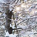 Snowy Sunbursts by Cheryl Baxter