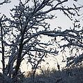 Snowy Sunrise by Teresa Mucha