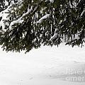 Snowy Tree Branches by Tara Lynn