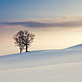 Drifts by Chris Dale