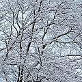 Snowy Tree Limb Maze by Cody Cookston
