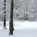 Snowy Trees by Cody Cookston