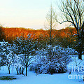 Snowy Trees In December Twilight - Pearl S. Buck Homestead by Anna Lisa Yoder