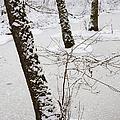 Snowy Trees In Frozen Pond - Winter Forest by Matthias Hauser