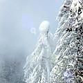 Snowy Trees by Kae Cheatham