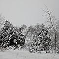 Snowy Trees by Linda Kerkau