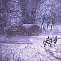 Snowy Turkey Trail by Paula Fankhauser