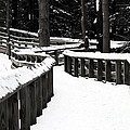 Snowy Walkway by Wendy Gertz