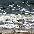 Snowy White Egret by Kim Pate