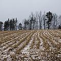 Snowy Winter Cornfields by Georgia Mizuleva