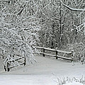 Snowy Winter by Karen Adams