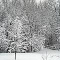 Snowy Woodland by Karen Adams
