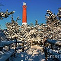 Snowy Woods At Barnegat Light by Nick Zelinsky