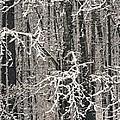 Snowy Woods by Carol Whaley Addassi