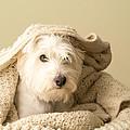 Snuggle Dog by Edward Fielding