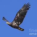 Soar Like An Eagle by Sharon Talson