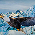 Soaring Bald Eagle by Gary Keesler