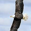 Soaring Eagle by Larry Ricker
